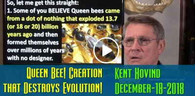 Kent Hovind: Queen Bee! Creation that Destroys Evolution! (December-18-2018)